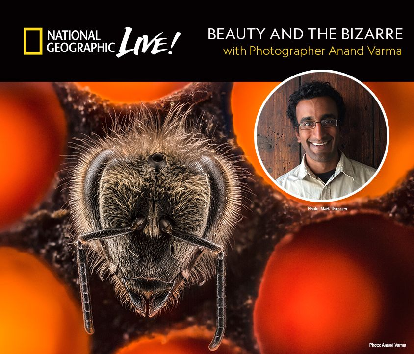 Beauty and the Bizarre with Anand Varma
